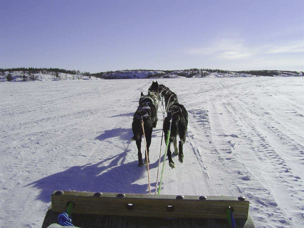 sled pulled by dogs